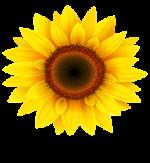 Sunflower Industries